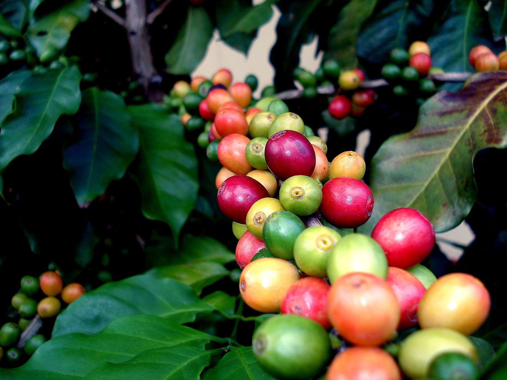 Vers gebrande specialty coffee